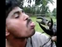 Idiota i krab