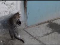 Inteligentny kot