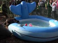 Wydry uczą się pływać :D