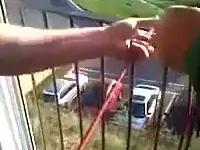 Alpinista amator schodzi z balkonu