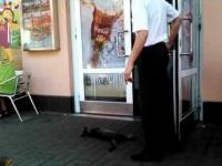 Kot który ma wszystko gdzieś...