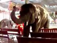 Tańczący i grający słoń