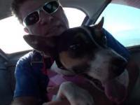 1 pies który skoczył na spadochronie
