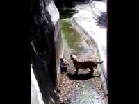 Z odwiedzinami u tygrysa