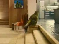 Budka dla ptaków od środka