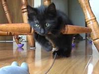 Kot który boi się myszy