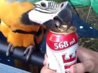 Genialna papuga