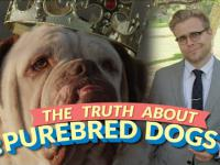 The Bizarre Truth About Purebred Dogs (and Why Mutts Are Better)