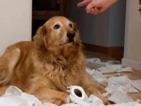 Psy z poczuciem winy