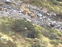 Polowanie na kozy w Nowej Zelandii