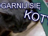 Ogarnij Się - Koty
