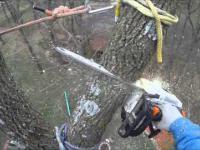 Ścinanie 30 metrowego drzewa