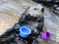 Bardzo sprytna wydra
