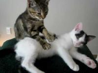 Masaż koci