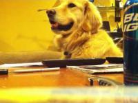 Pies który lubi gdy grasz na gitarze