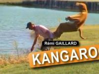 Rémi GAILLARD - Kangur