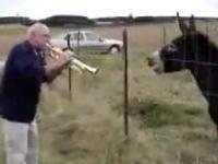 Śpiewający Osioł