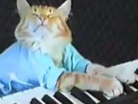 Kot na Keyboardzie Charliego Schmidta