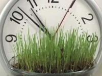 Jak rośnie trawa?