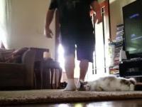 Grubasek chciał ukarać kota za to że narobił na dywan