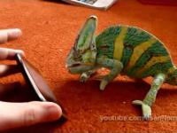 Kameleon walczy z Ipadem