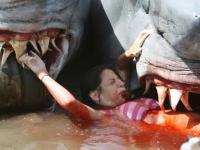 Best Shark Attack Human - Video ✔
