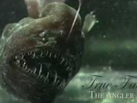 Zbiór ciekawych faktów o żabnicokształtnych