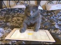 Kot grający na Ipadzie