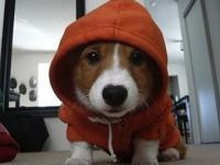 THUG LIFE Animals - Short funny compilation
