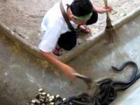 Sprzątanie domu kobr