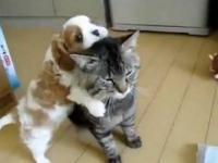 Świat najbardziej cierpliwy kot