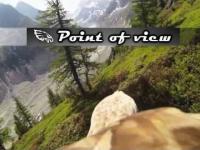Widok z grzbietu lecącego orła