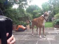 Pies spiewa do akordeonu