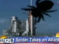 Olbrzymi pająk atakuje NASA i terroryzuje reporterów wiadomości