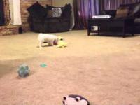 szczeniak Całkowicie podekscytowani nowych zabawek