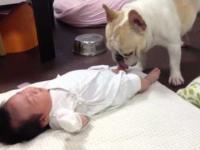 Jak uśpić dziecko przy pomocy psa