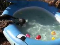 Baby Otters dowiedzieć się basen