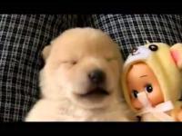 Puppy Wet Dreams podczas snu