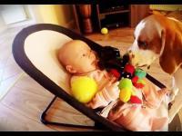 Pies po zabraniu zabawki dziecku a pózniej próbuje odkupić swoje winy