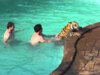 Zabawa z tygrysem w basenie