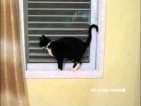 Kot z lękiem wysokości