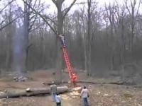 Jak nie należy ścinać drzew