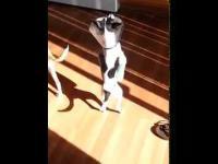 Pies który złamał dwie nogi