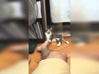 Kot znalazł darmowy sposób na odlot