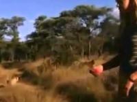 Marlice Van Der Merwe i jej gepardy