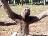 Aktywnośc leniwca