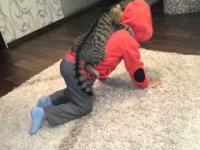 Koci najeźdźca