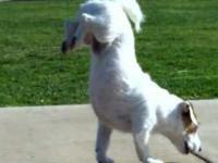 Najinteligentniejszy pies na świecie