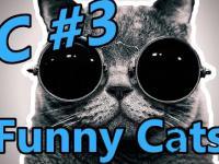 Śmieszna kompilacja kotów