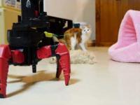 Robot bawi się z kotami
